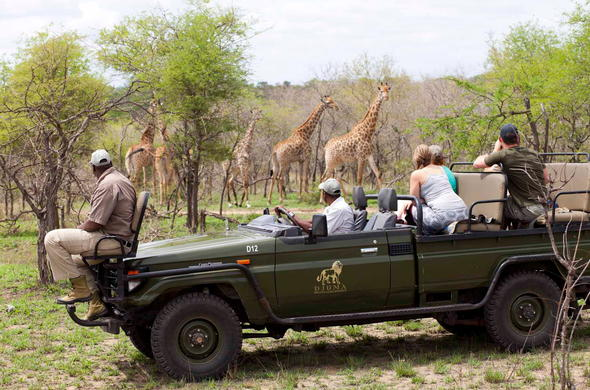 spot giraffes and other wildlife on game drives.