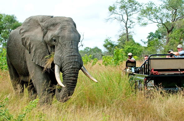 The Sabi Sands Game Reserve offers outstanding game viewing opportunities.