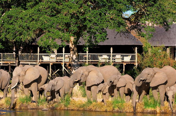 A herd of the elephant spotted on the premises of Sabi Sabi Bush Lodge.